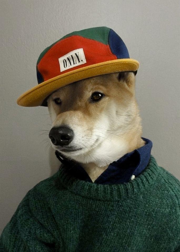 Menswear-Dog-Bodhi-the-Worlds-Best-Dressed-Dog