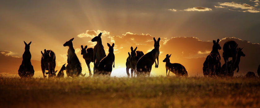 Chinese Travelers Choose Australia!