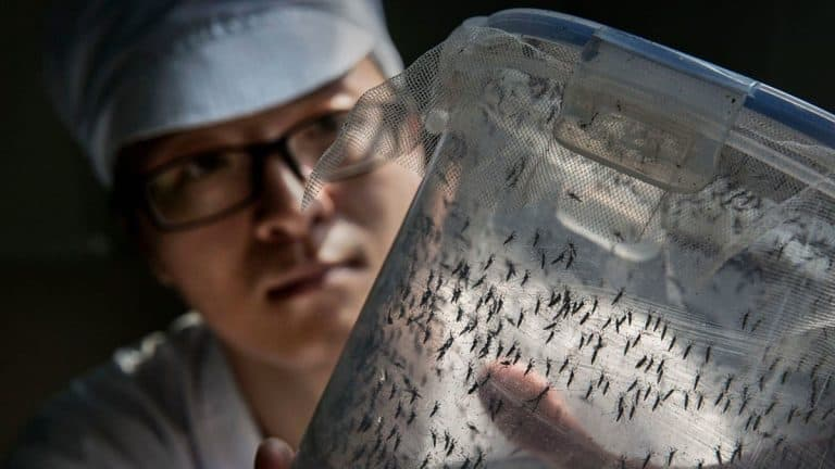 The growing demand for natural insect repellents in China